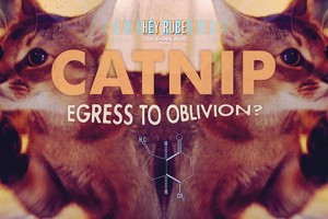 """Catnip: Egress To Oblivion"" Wows at Sundance"